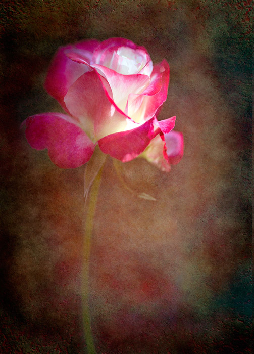 oil paint effect Denise Ippolito – Flower with Texture