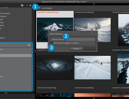 Collections User Guide