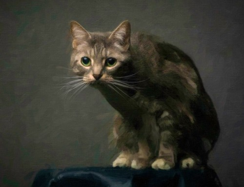 Painting with Exposure and Snap Art